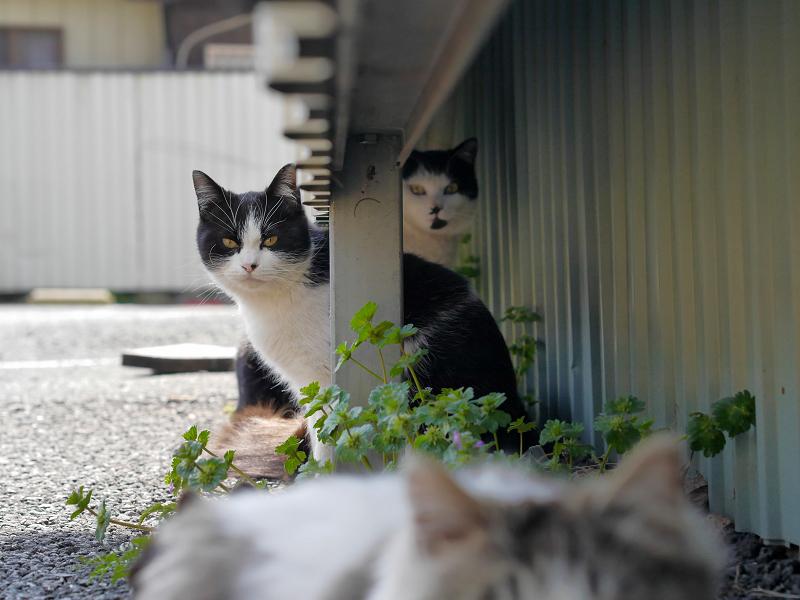 猫遠近法2