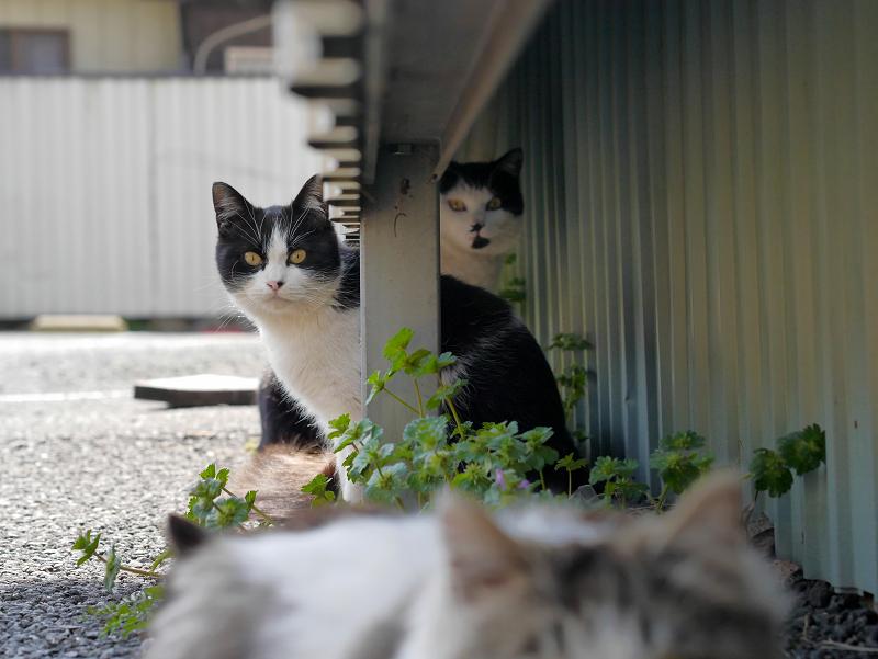 猫遠近法3