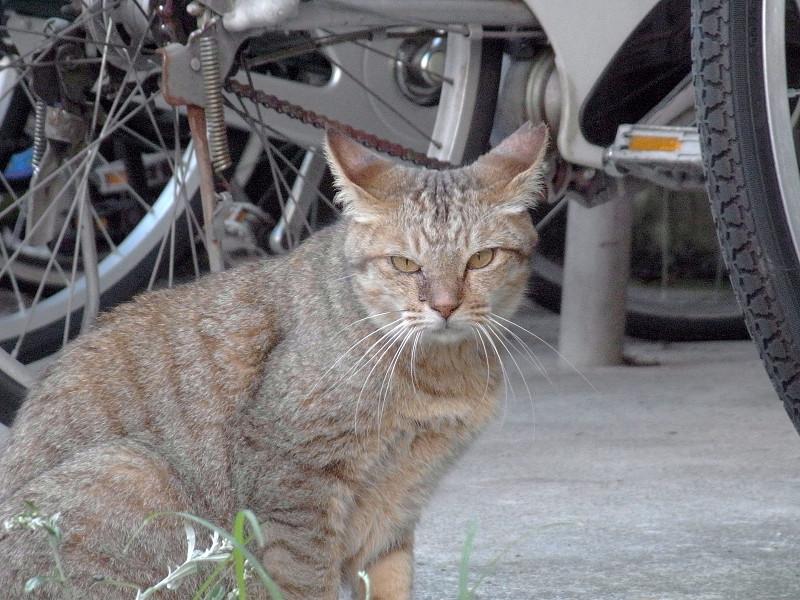 駐輪場の猫3