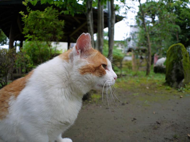 庭園の茶白猫2