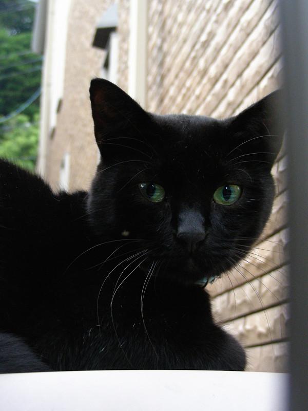 レンガ背景と黒猫1