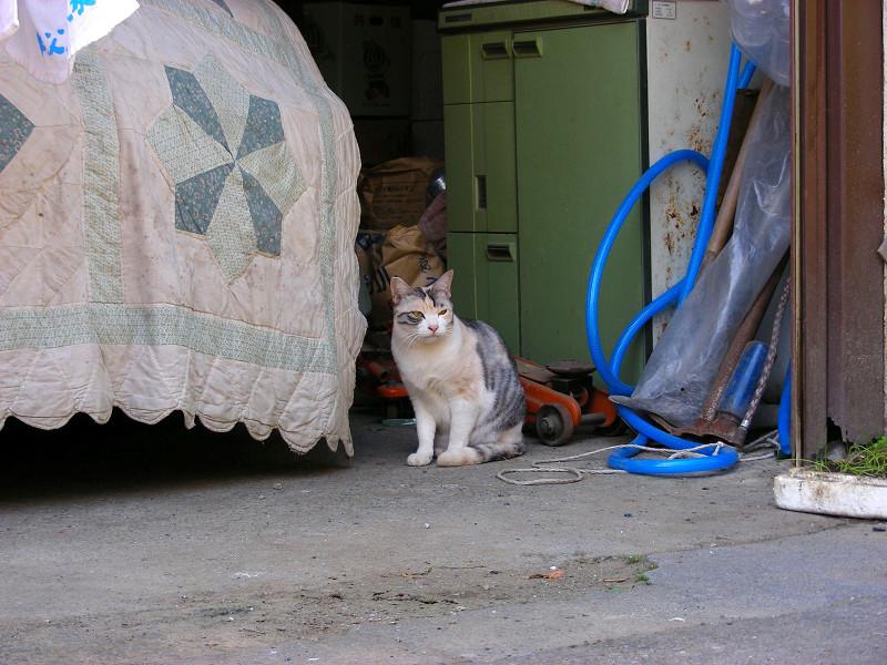 シーツと猫1