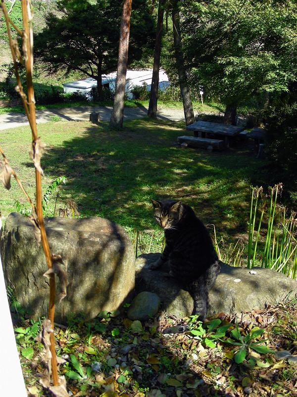 坂道とキジトラ猫1