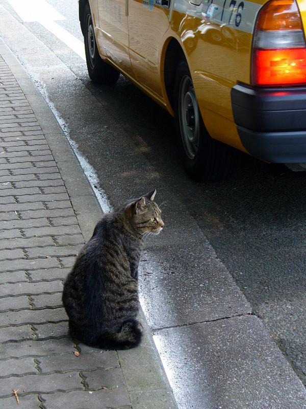 歩道とキジトラ猫1