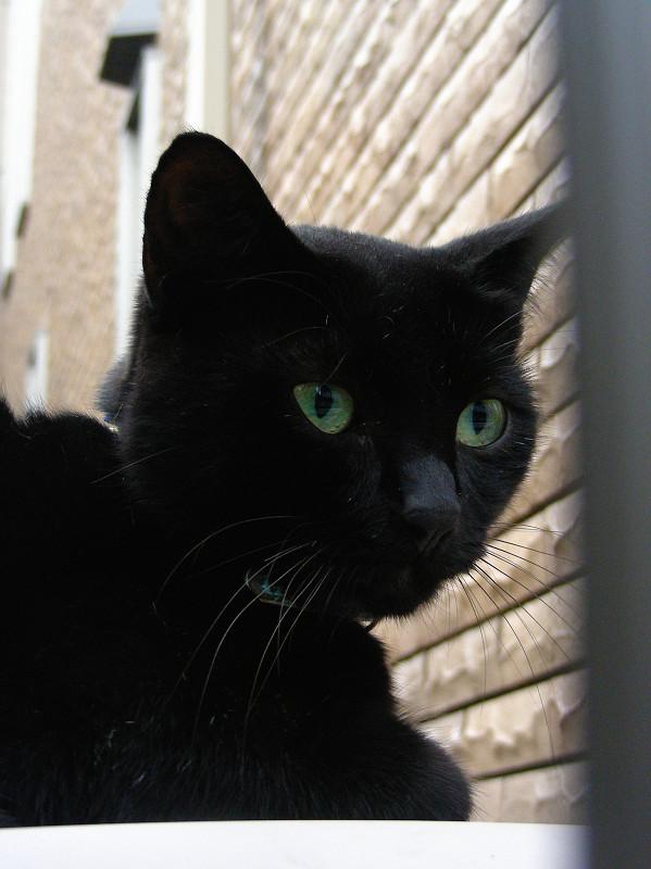 レンガ背景と黒猫2