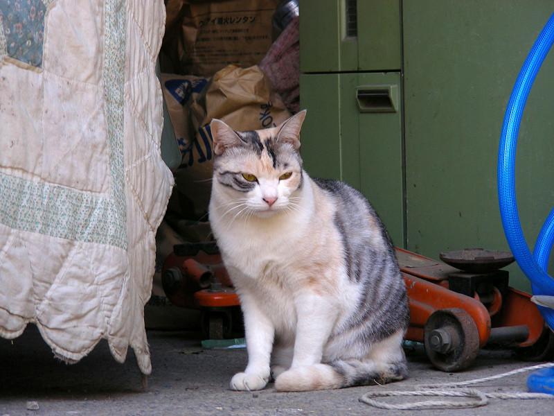 シーツと猫2