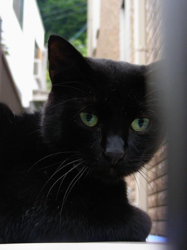 レンガ背景と黒猫3