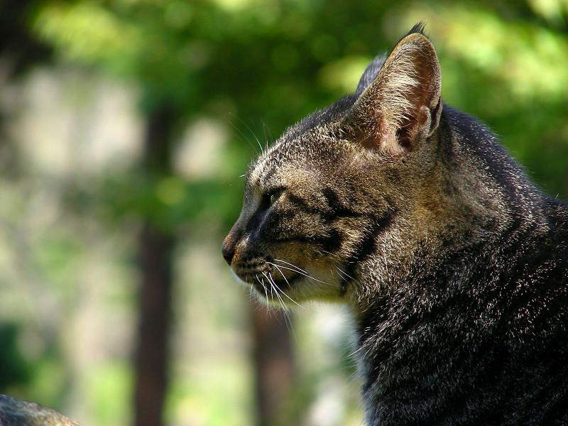 坂道とキジトラ猫3