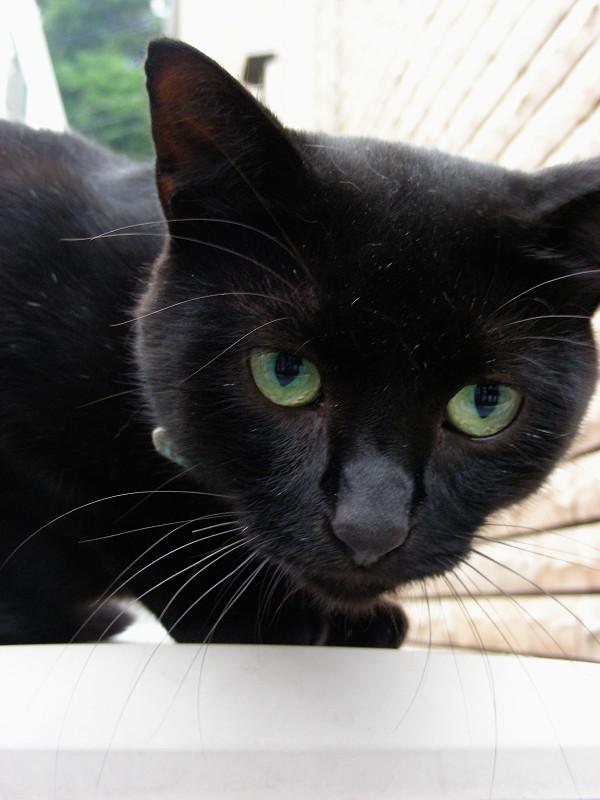レンガ背景と黒猫4