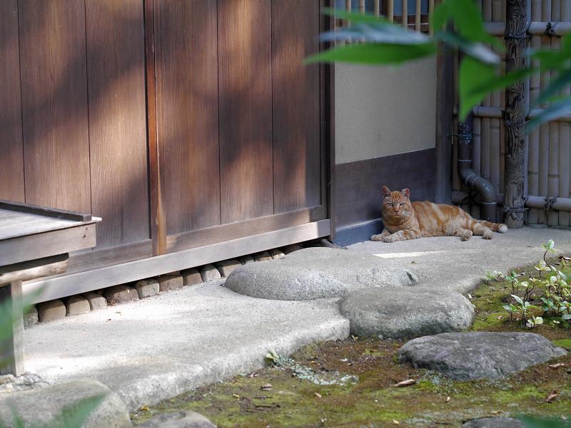 茶室の横の猫1
