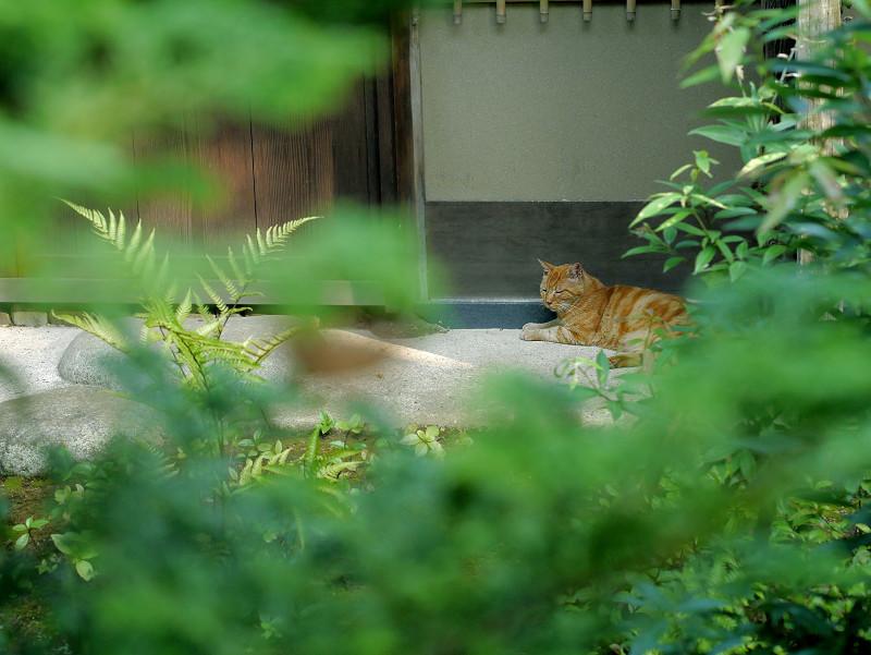 茶室の横の猫2