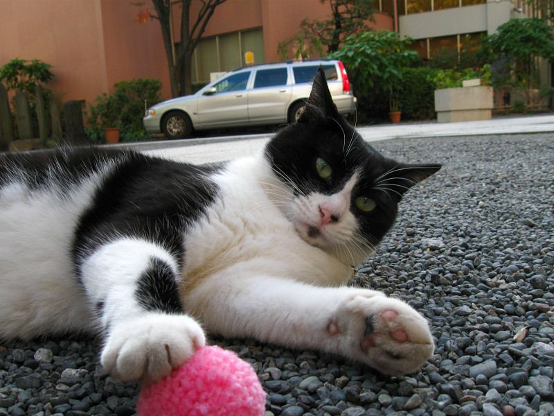 桃色のボールと黒白猫1