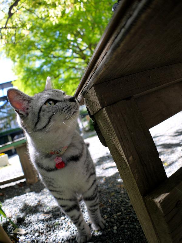 ベンチとサバトラ猫1