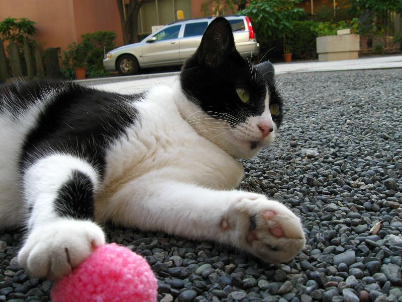 桃色のボールと黒白猫2