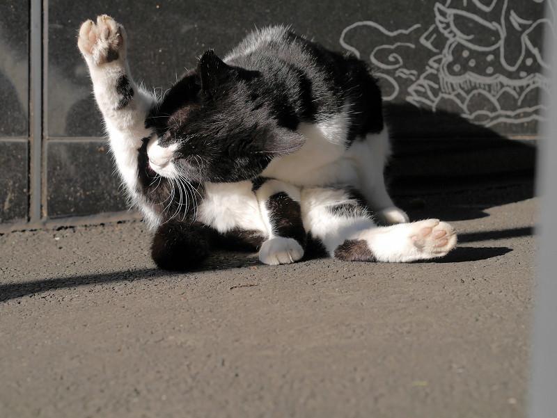 足を上げてる黒白猫2