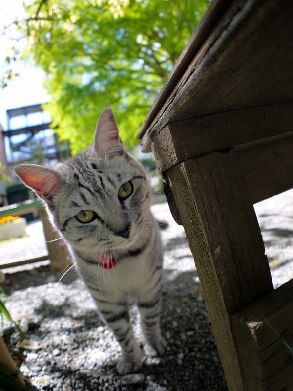 ベンチとサバトラ猫2