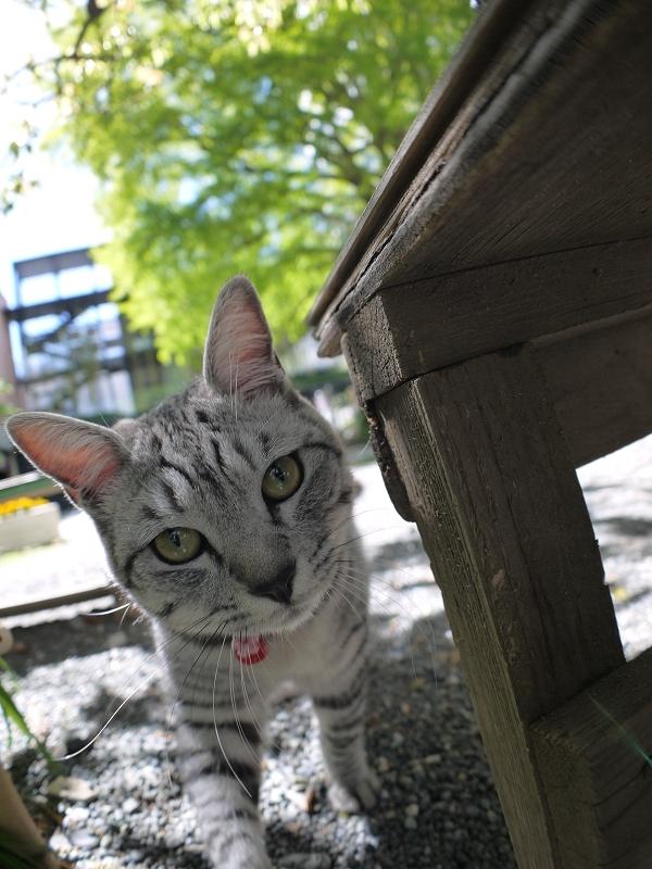 ベンチとサバトラ猫3