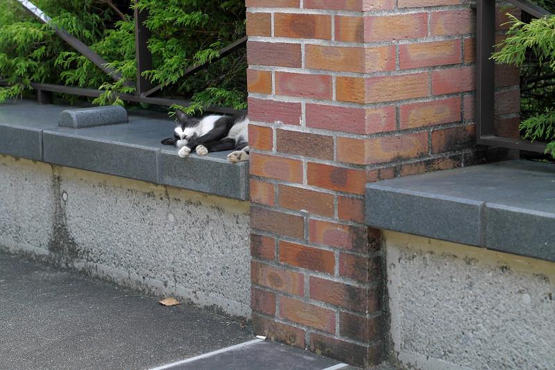 煉瓦の支柱と黒白猫1