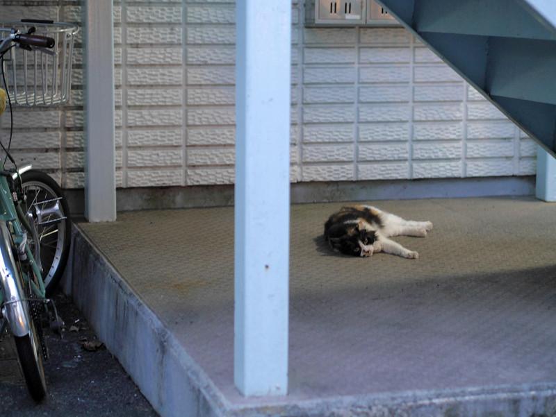 階段の下で横たわる毛が長い三毛猫1