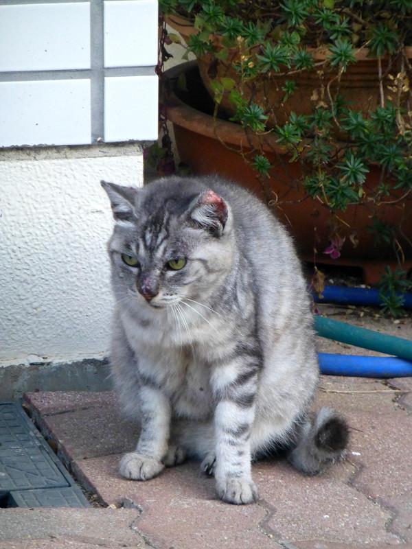 毛繕いしてる猫2