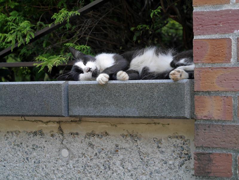 煉瓦の支柱と黒白猫2