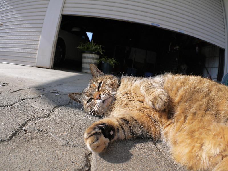 触られながら見ているサビ柄猫2