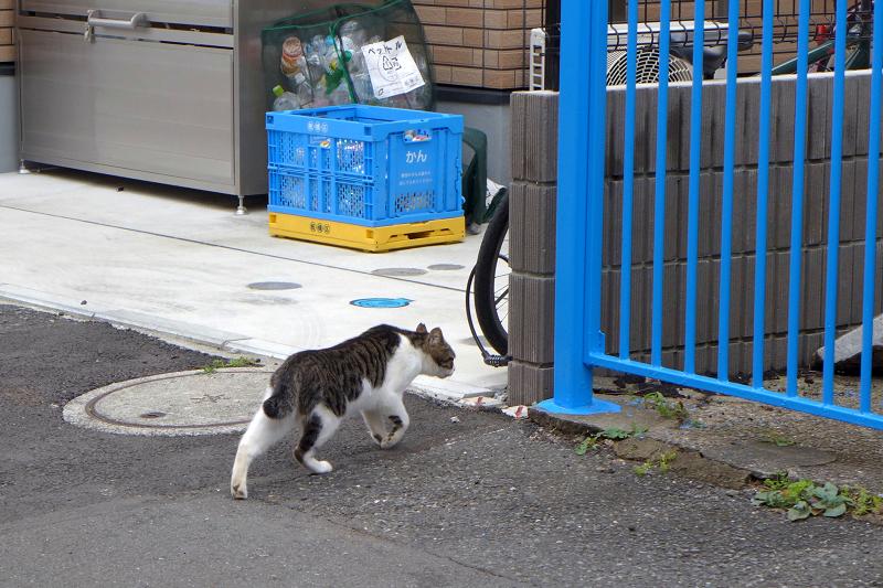 逃げているキジ白猫1