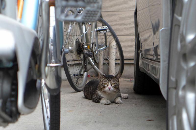 民家のガレージのキジ白猫2