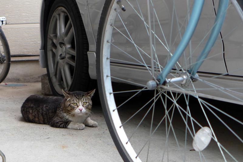 民家のガレージのキジ白猫3