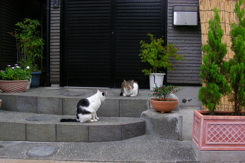 豪邸玄関の猫1