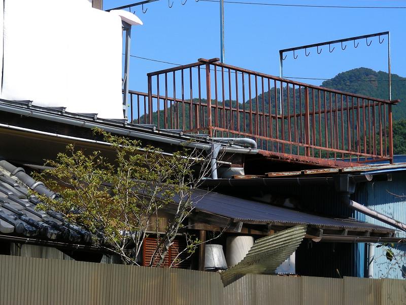 屋根の間の猫1