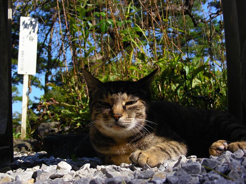ベンチ下のキジトラ猫1