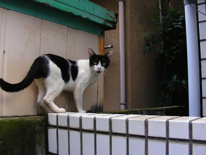 戻ってきた白黒猫2