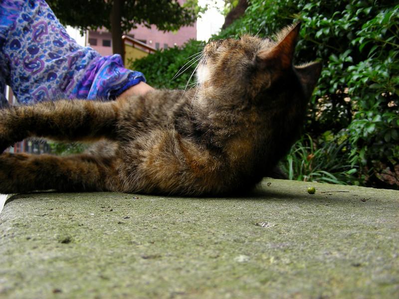起き上がったサビ柄猫2