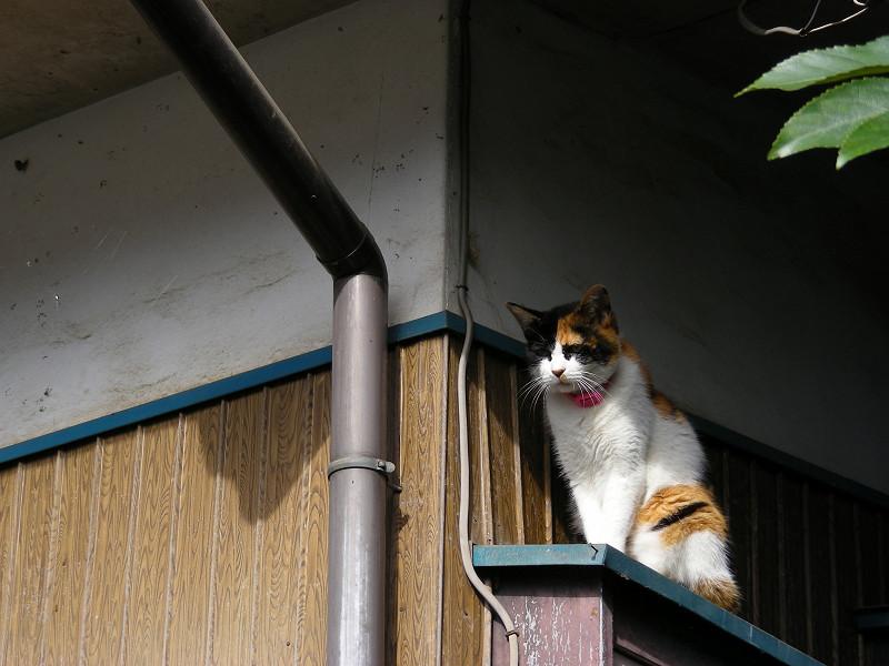 民家壁横の三毛猫2
