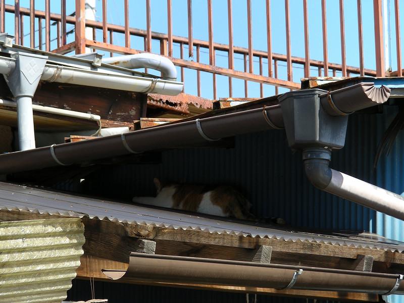屋根の間の猫2