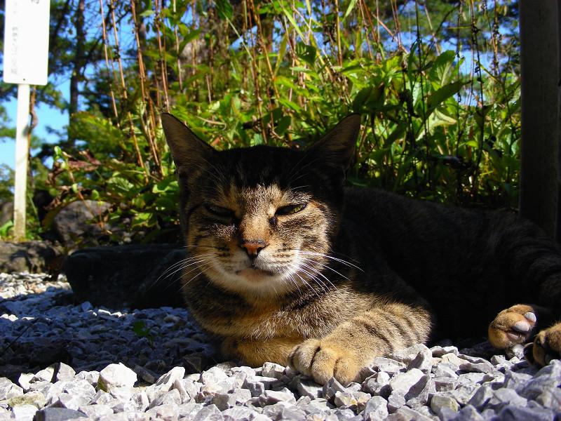ベンチ下のキジトラ猫2