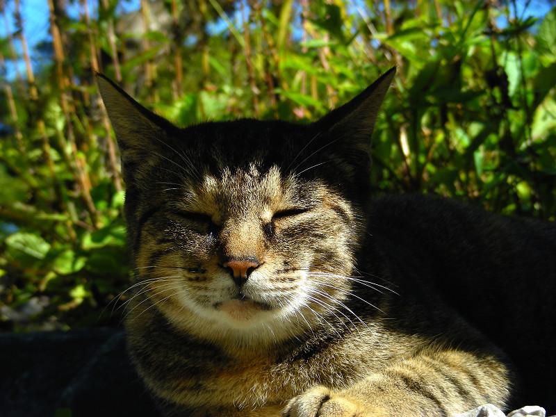 ベンチ下のキジトラ猫3