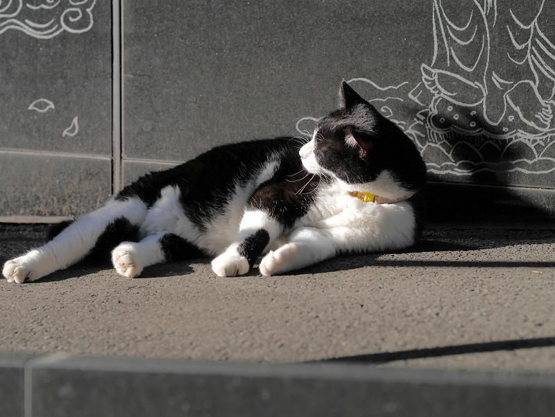 顔を動かしてる黒白猫2