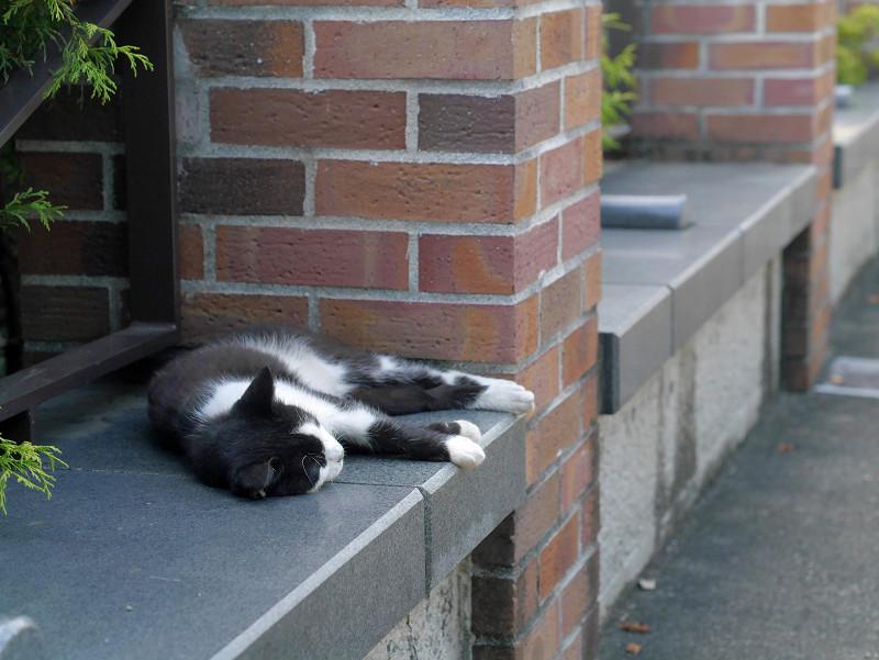 赤レンガ支柱と黒白猫1