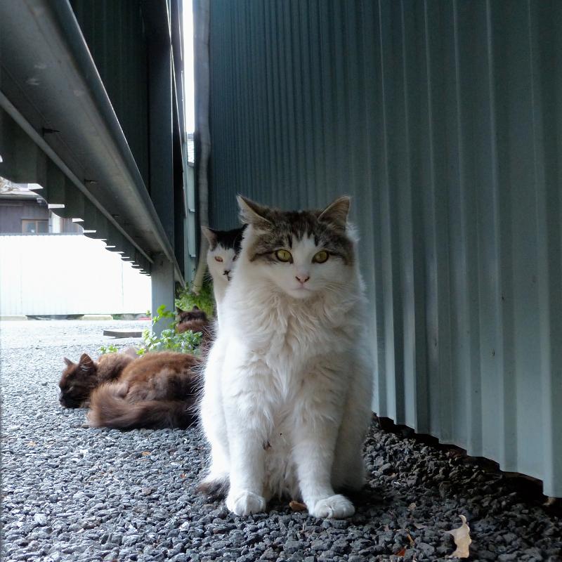 トタン板の横の猫たち1