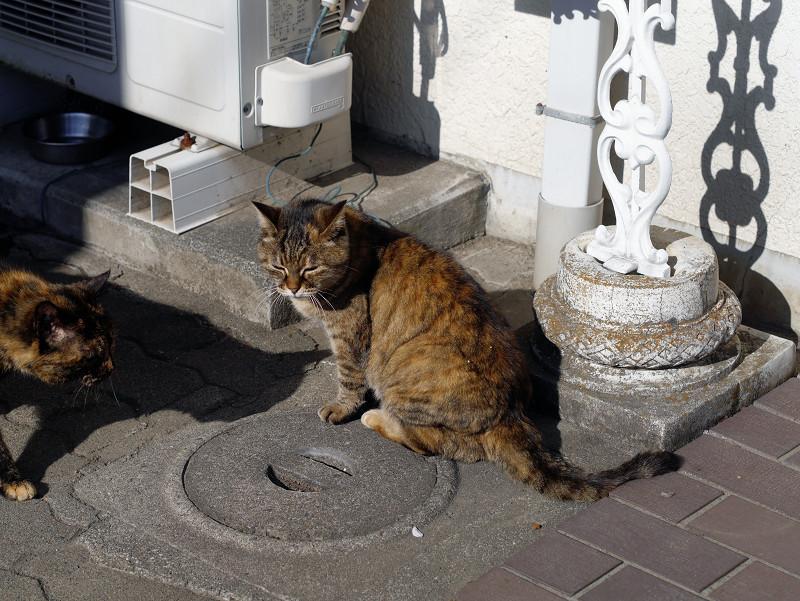 交差するサビ柄猫たち1