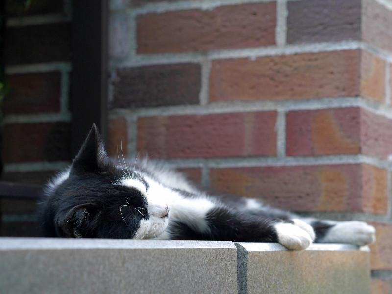 赤レンガ支柱と黒白猫2