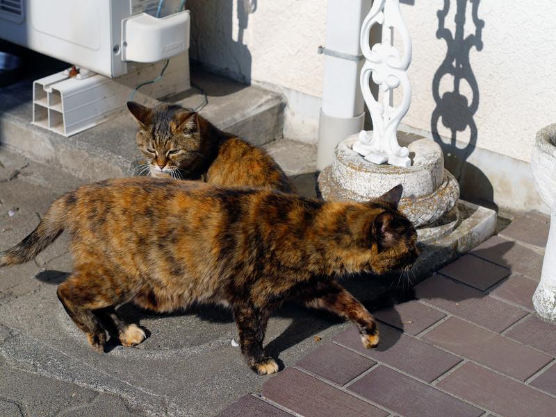 交差するサビ柄猫たち2