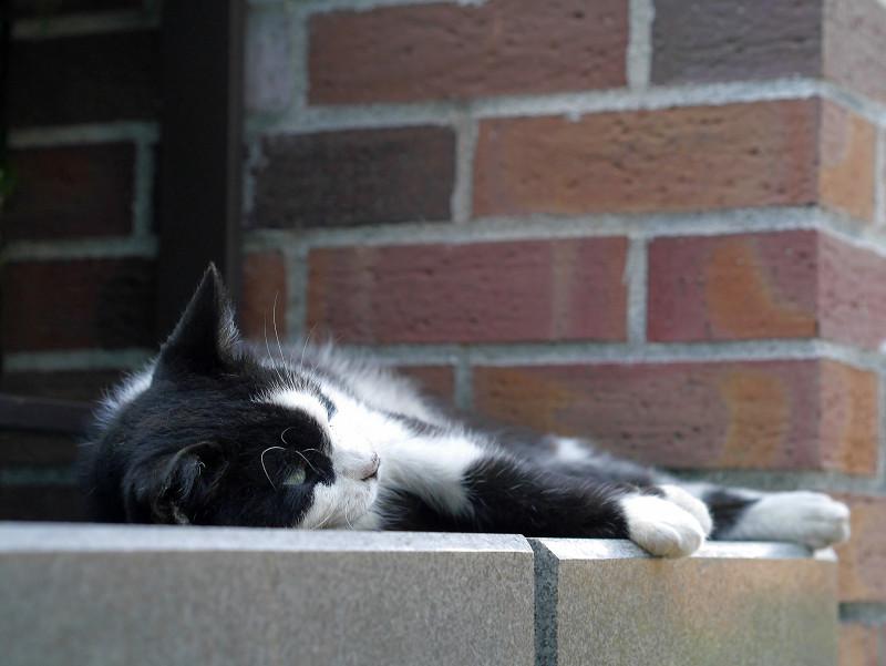 赤レンガ支柱と黒白猫3