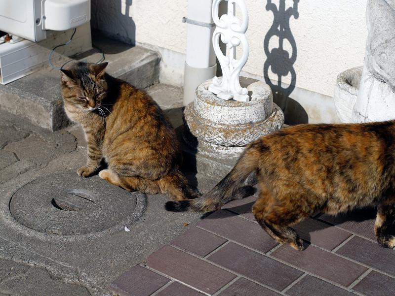 交差するサビ柄猫たち3