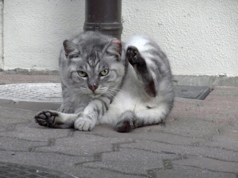 毛繕いしてる猫3