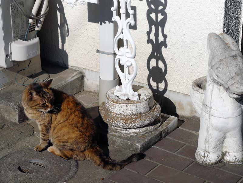 交差するサビ柄猫たち4