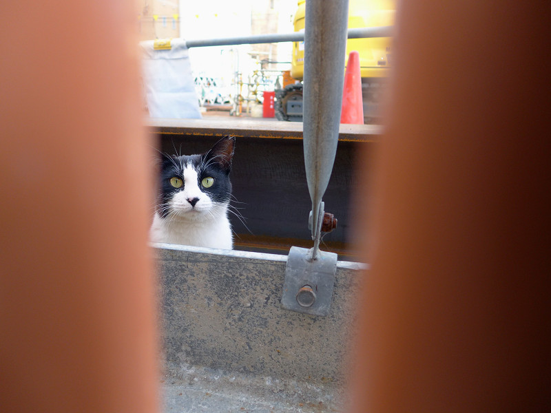 隙間に寄って来た黒白猫1