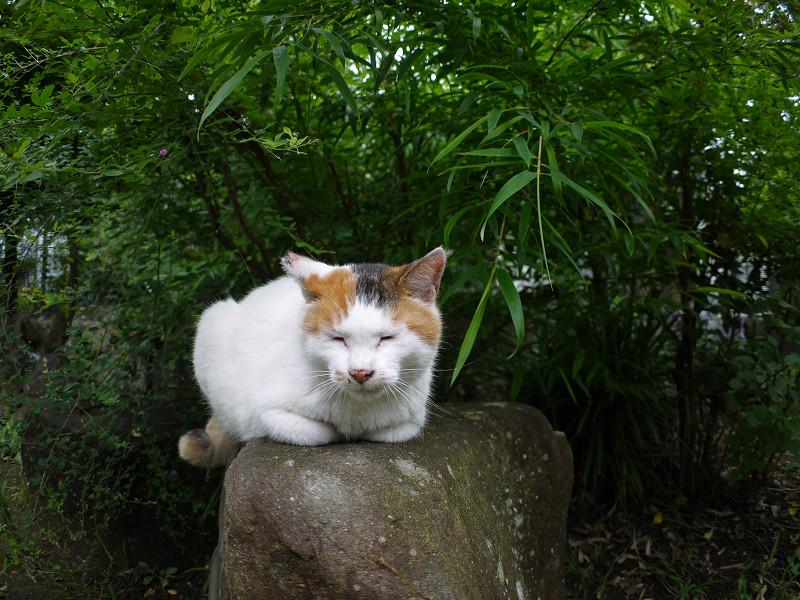 小岩に乗ってる白三毛猫1